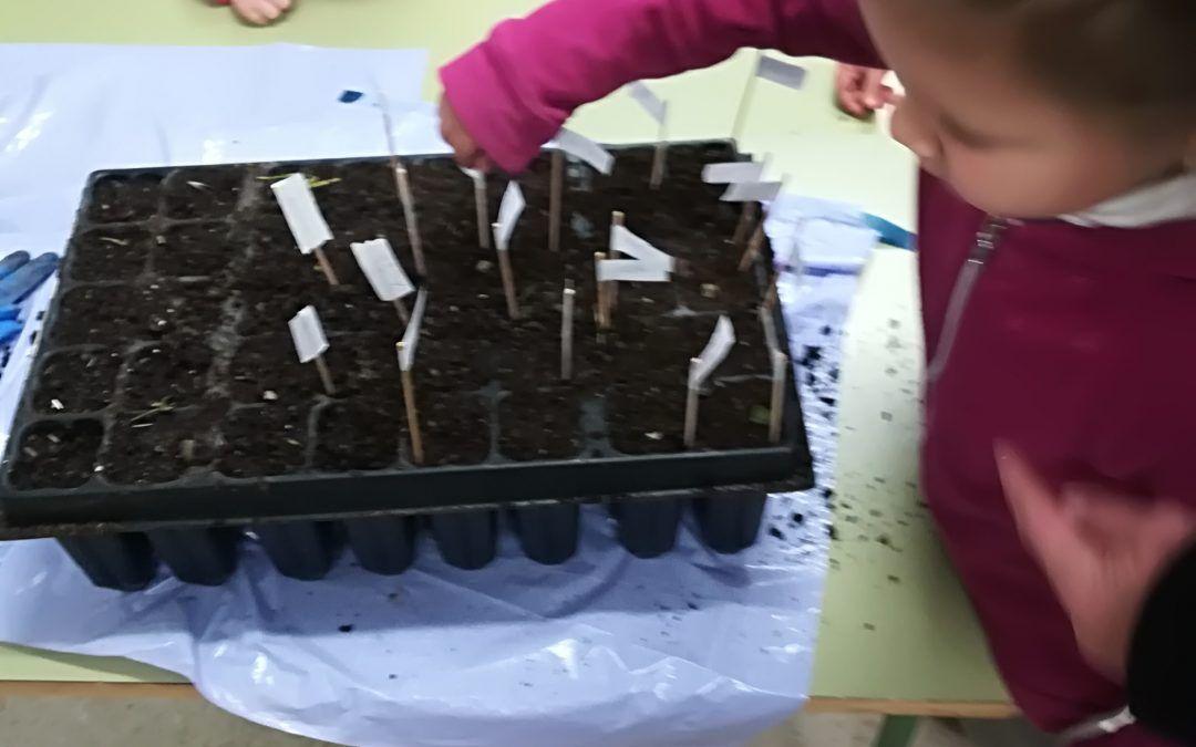 Los alumnos del colegio de Pinos Genil siembran bellotas con ACCC Granada