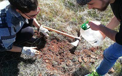 Siembra de encinas y arbustos en el Parque Periurbano. 27 de enero.